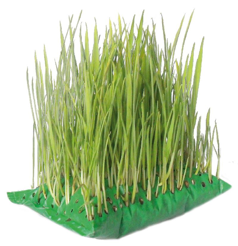 Cat grass bag